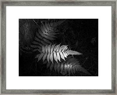 Fern Life B/w Framed Print by Marvin Spates