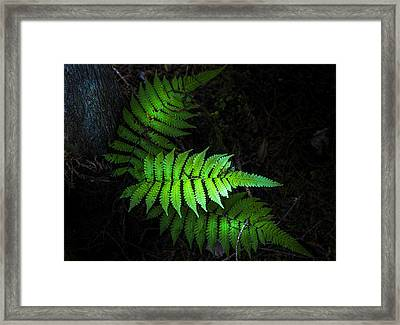 Fern Life Framed Print by Marvin Spates