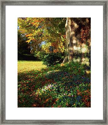 Fernhill Gardens, Co Dublin, Ireland Framed Print by The Irish Image Collection