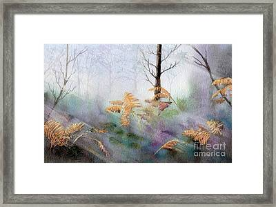 Ferns In The Forest Framed Print by Kim Hamilton