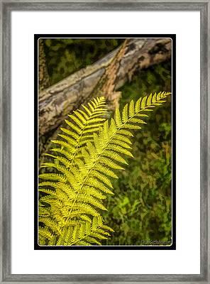 Ferns On Miller Pond Boardwalk  Framed Print by LeeAnn McLaneGoetz McLaneGoetzStudioLLCcom