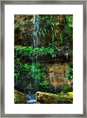 Ferns Under A Waterfall Framed Print by Kaye Menner