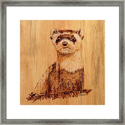 Ferret Pillow/bag Framed Print by Ron Haist