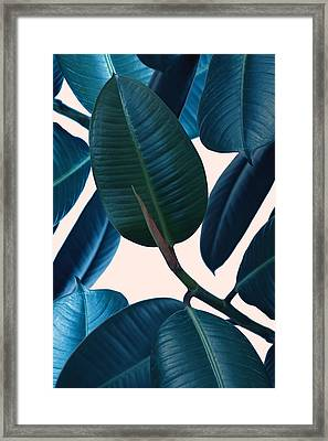Ficus Elastica 2 Framed Print by Mark Ashkenazi