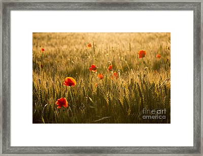 Field And Poppies Framed Print by Sophie De Roumanie