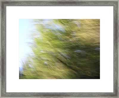 Field Of Dreams Framed Print by Brad Wilson