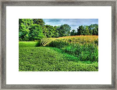 Field Of Dreams Iv Framed Print by Steven Ainsworth