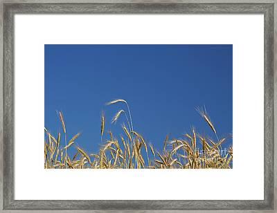 Field Of Dreams Framed Print by John Stephens