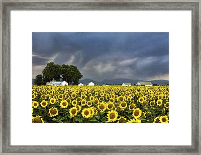 Field Of Flowers  Framed Print by James Steele