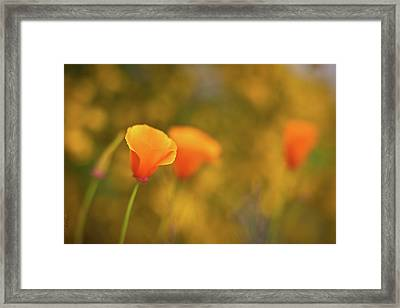 Field Of Gold Framed Print by Mike Reid