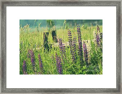 Field Of Lupin Flowers  Framed Print by Sandra Cunningham