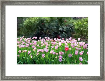 Field Of Pink Flowers Framed Print by Gary Grayson