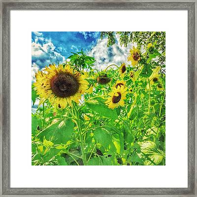 Field Of The Suns  Framed Print by Jame Hayes