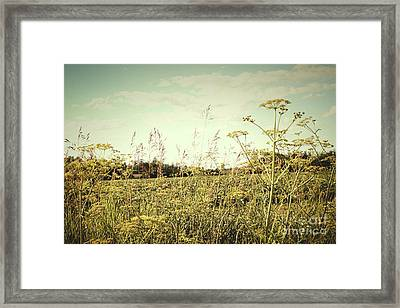Field Of Wild Dill In The Afternoon Sun  Framed Print by Sandra Cunningham