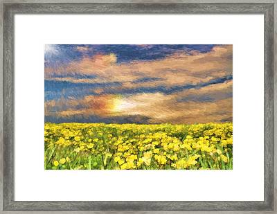 Field Of Yellow Daffodils Framed Print by Dan Sproul