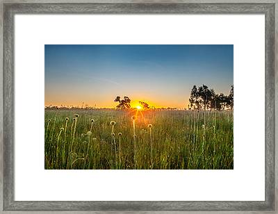 Fields Of Gold Framed Print by Az Jackson