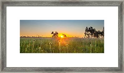 Fields Of Gold Panorama Framed Print by Az Jackson