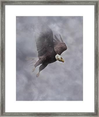 Fierce Pair 1 Of 2 Framed Print by Betsy Knapp