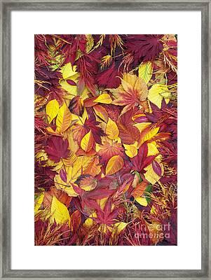 Fiery Autumnal Foliage Framed Print by Tim Gainey