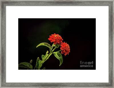 Fiery Red Framed Print by Arnie Goldstein