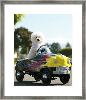 Fifi Goes For A Car Ride Framed Print by Michael Ledray