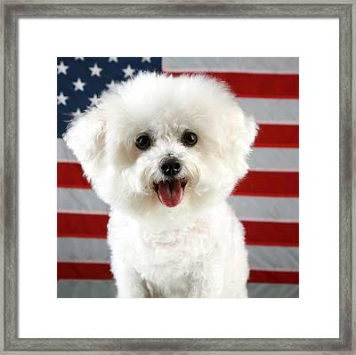 Fifi Loves America Framed Print by Michael Ledray