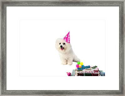 Fifi Loves Birthdays Framed Print by Michael Ledray