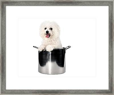 Fifi Loves To Cook Framed Print by Michael Ledray