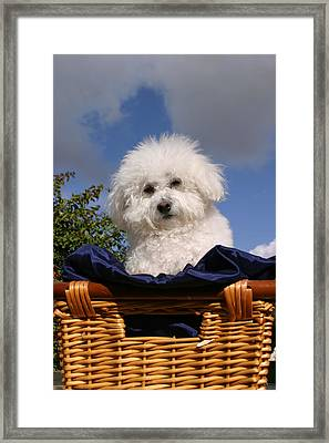 Fifi Says Hi Framed Print by Michael Ledray