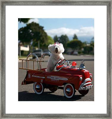 Fifi The Bichon Frise To The Rescue Framed Print by Michael Ledray