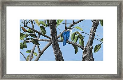 Filipino Kingfisher Framed Print by Wendy Ballentyne