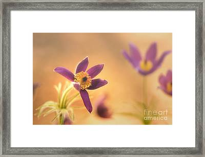 Fine Flower In Detail Framed Print by Tanja Riedel