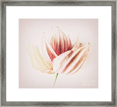 Fine Framed Print by SK Pfphotography