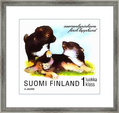 Finnish Lapphund Framed Print by Lanjee Chee