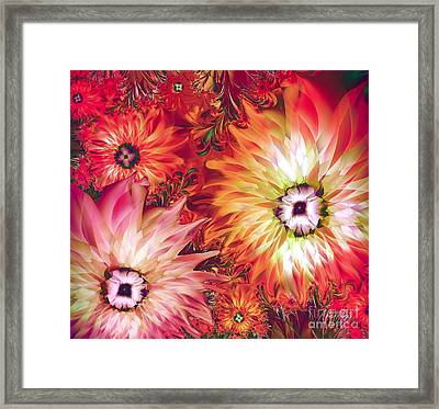 Fire Asters Framed Print by Mindy Sommers