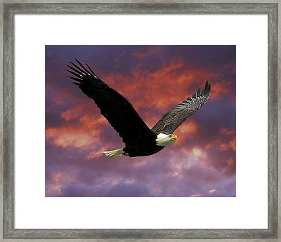 Fire Cloud And Eagle Framed Print by Clarence Alford