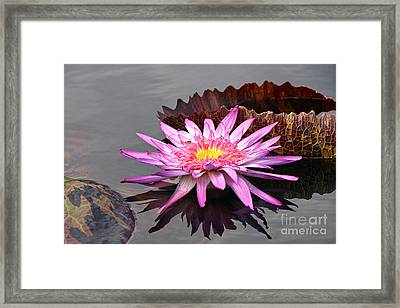 Fire Of The Pond Framed Print by Byron Varvarigos