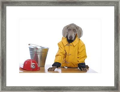 Firedog Framed Print by Nancy Ingersoll