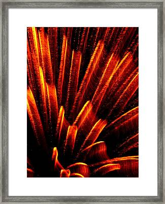Fireworks Abstraction 1 Framed Print by Beth Akerman