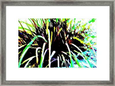 Fireworks Framed Print by Marsha Heiken