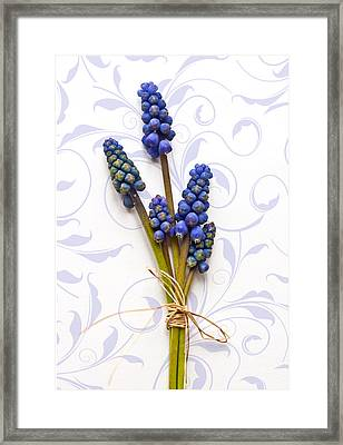 First Sign Of Spring Framed Print by Maggie Terlecki