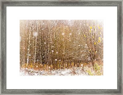 First Snow. Snow Flakes I Framed Print by Jenny Rainbow