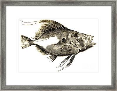 Fish Framed Print by Antonio Lafreri