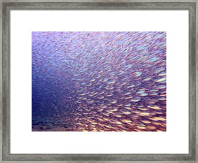 Fish Dreams Framed Print by Dr Peter M Forster