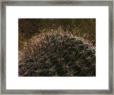 Fish Hook Cactus Framed Print by Jean Noren