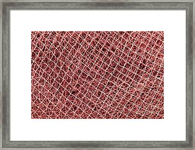 Fishing Nets Framed Print by Gaspar Avila