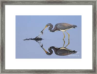 Fishing Reflection  Framed Print by Rick Mann