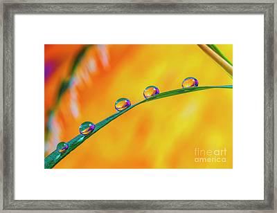 Five Drops Framed Print by Veikko Suikkanen