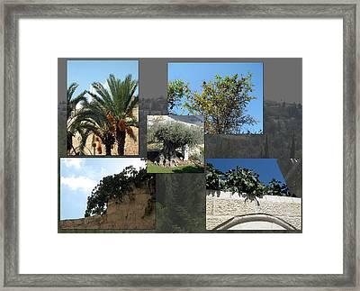 Five Fruit Of Israel Framed Print by Menucha Citron