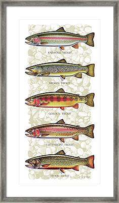 Five Trout Panel Framed Print by JQ Licensing